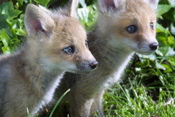 Roanoke Wildlife Removal